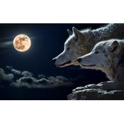 Mural lobos luna - fotomural de animales husky
