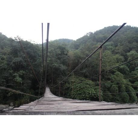 Fotomural puente entre bosque - vinilos decorativos