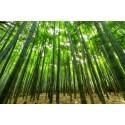 Fotomural cañas de bambú