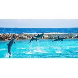 Vinilo decorativo delfines