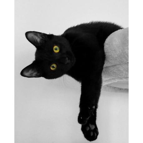 fotomural gato