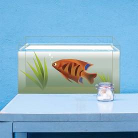 Vinilo acuarios peces